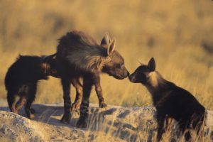 copy_of_bh16_sub-adult___cubs_greeting6